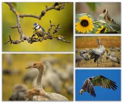 Postkarten-Set: Faszination Vogelwelt