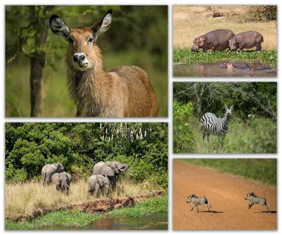 Postkarten-Set: Wildtiere Afrikas